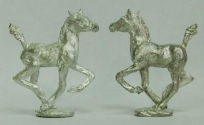 5011 Foal