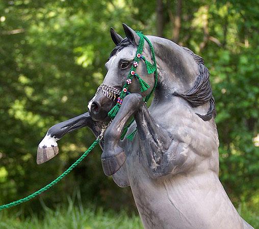 Altizar with Arabian halter